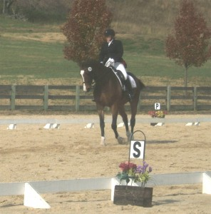 Greystone Equestrian Center 11-11-2012